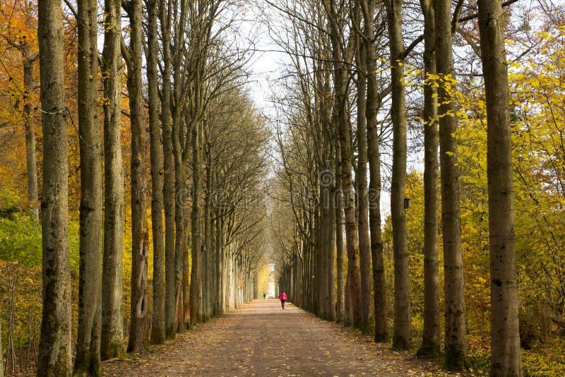 Perspectiefmening van Bomen royalty-vrije stock afbeeldingen