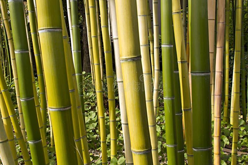 Perspectiva de bambú 2 del bosque imagenes de archivo