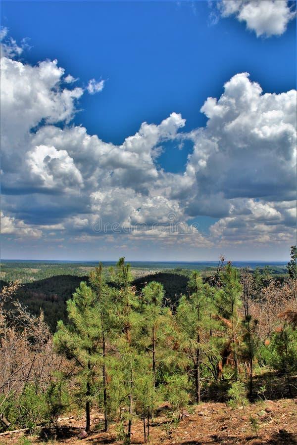 Perspectiva de la burguesía alta, bosque del Estado de Apache Sitgreaves, Arizona, Estados Unidos fotos de archivo