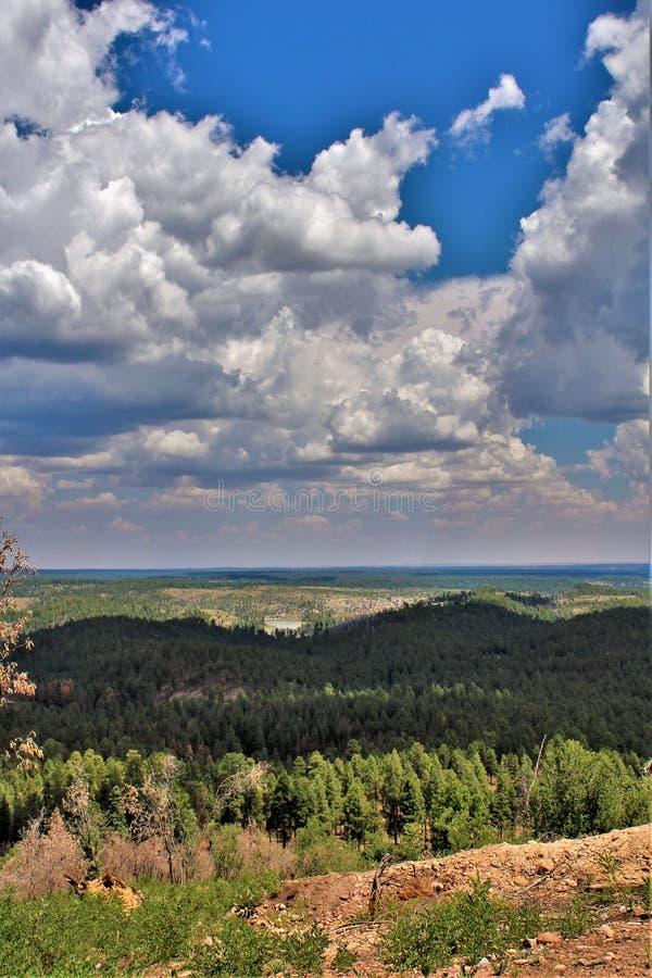 Perspectiva de la burguesía alta, bosque del Estado de Apache Sitgreaves, Arizona, Estados Unidos fotografía de archivo libre de regalías