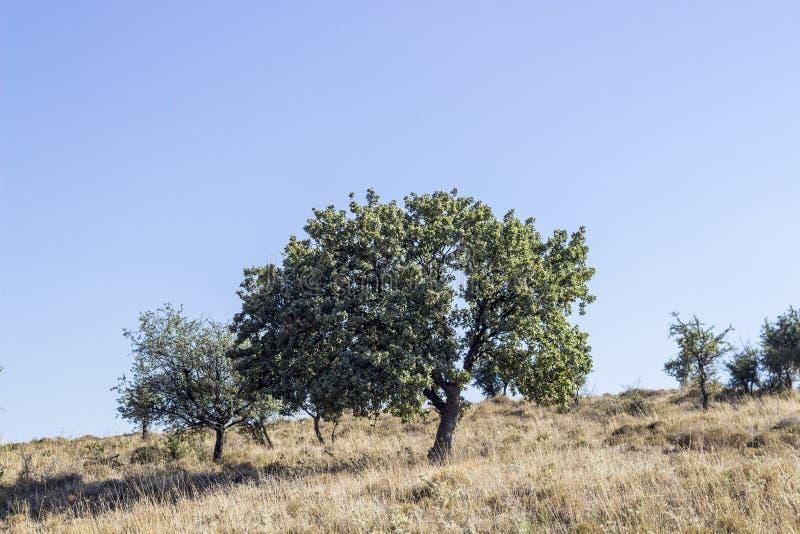 A perspectiva disparou da árvore verde no lado do condado do trigo do monte em Izmir em Seferihisar foto de stock