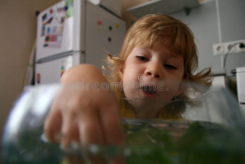 Perspectiva dos peixes s fotos de stock