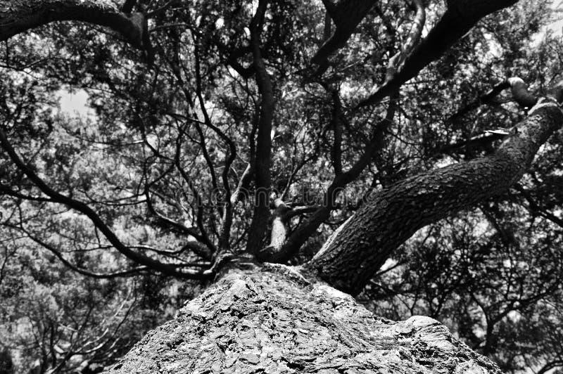 Perspectiva hermosa de ramas naturales imagen de archivo libre de regalías