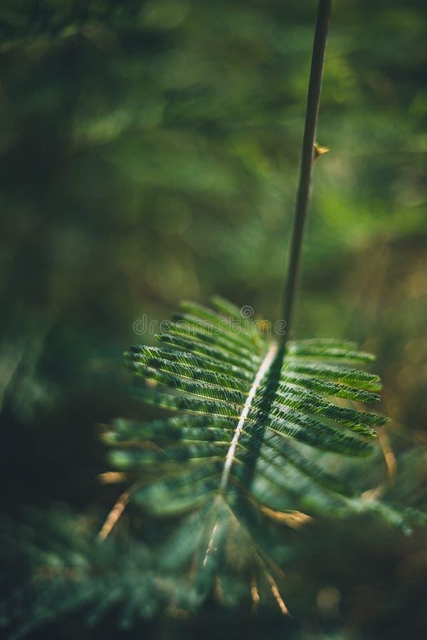 Perspectiva verde de la hoja del árbol tirada con el fondo borroso fotografía de archivo libre de regalías