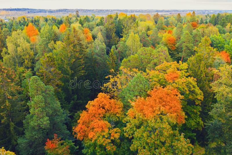 Perspective aerial view above colourful forest beautiful bright crowns of trees in the autumn season royalty free stock images