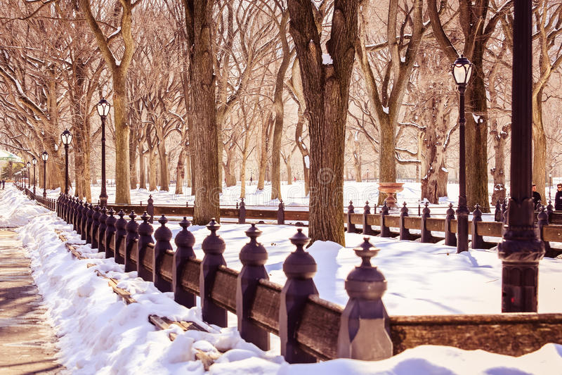Perspective Central Park winter, is a most magical moment. Perfect conditions for a great pic. Love the shadows and the light. Central Park is at its most royalty free stock photography