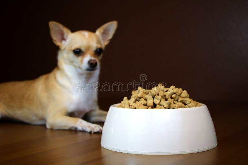 Perspective de chien d'un bol de nourriture photos libres de droits