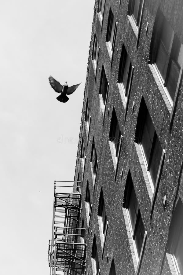 Perspective en vol photos libres de droits