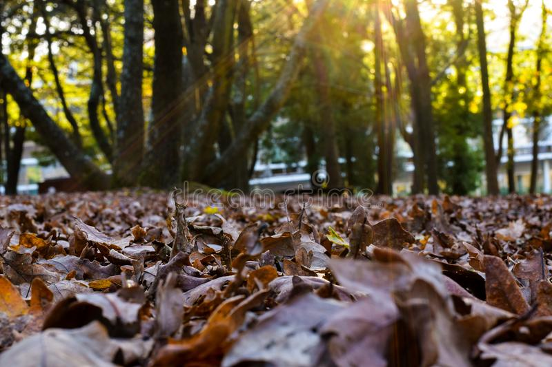 Afternoon in the park. royalty free stock image