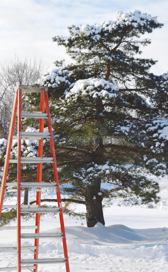 Download Perspective - Ladder Being Set Up To Trim A Tree Stock Photo - Image: 83719537