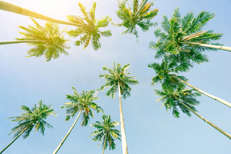 Perspective view of coconut palm trees and sky from the beach up stock images