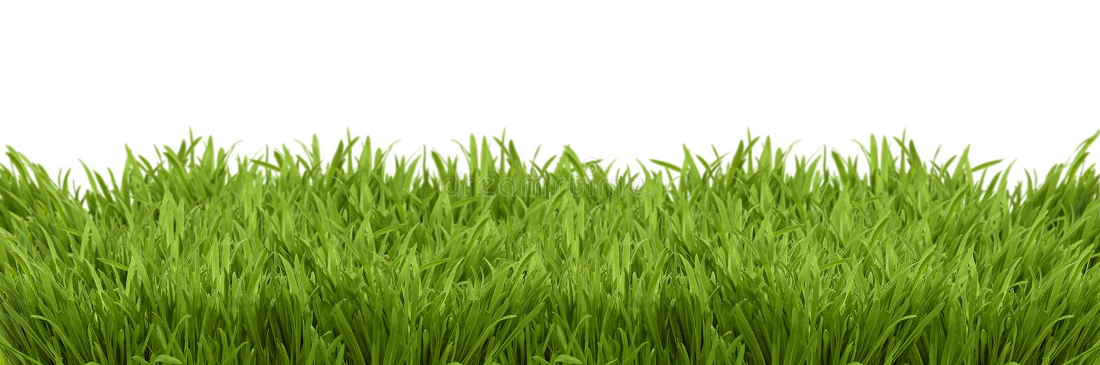 Download A Perspective View Of A Green Lush Royalty Free Stock Image - Image: 17309026