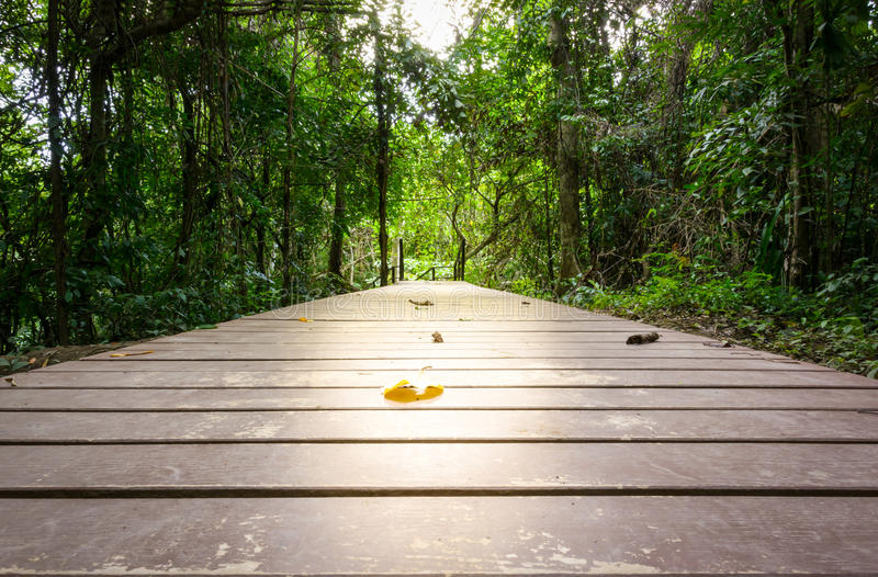 Perspective of wood bridge in deep stock images