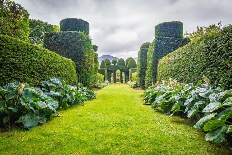 Perspektiv på underligt formade idegransträn i trädgården av Plas Brondanw, norr Wales arkivbilder