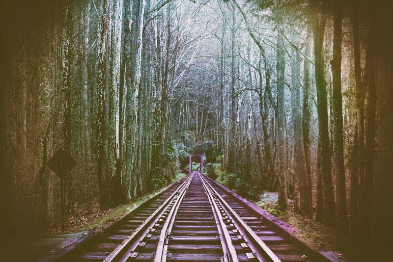 Perspektiven-abstrakte Fotografie von Zug-Schienensträngen im Wald lizenzfreie stockfotos