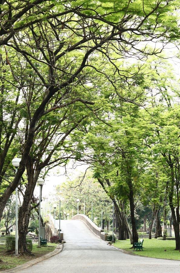 Perspektywa w Chatuchak parku przy Bangkok, Tajlandia fotografia royalty free