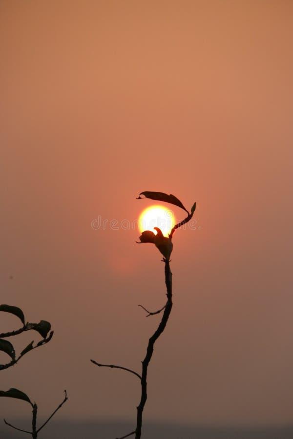 Perspektywiczny lampy światła natury słońce zdjęcia stock