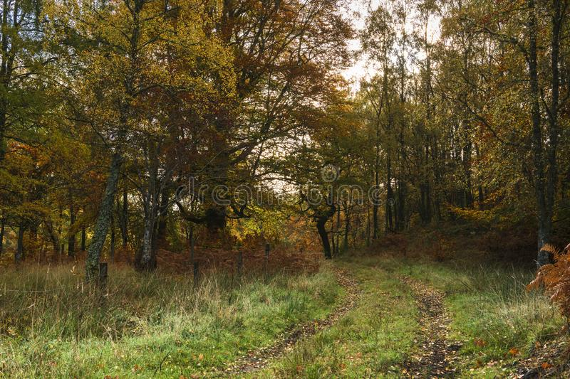 Perthshire woodland. A track leading off into the autumanl woodland of Perth and Kinross, Scotland. 18 October 2018 royalty free stock photos
