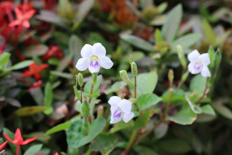 Perto acima, flores bonitas, folhas verdes na natureza da manhã imagens de stock royalty free