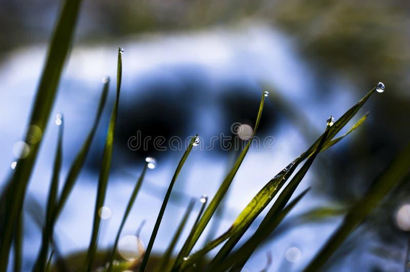 Perto acima, macro de gotas de orvalho nas lâminas da grama fresca, raios da manhã do sol, economia da água e conceito verde, pla fotos de stock royalty free