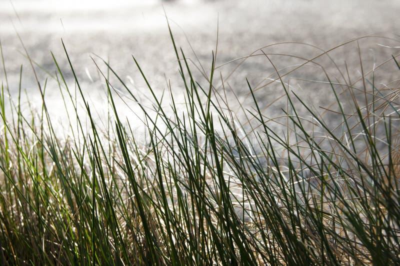 Perto acima, macro de gotas de orvalho nas lâminas da grama fresca, raios da manhã do sol, economia da água e conceito verde, pla fotografia de stock