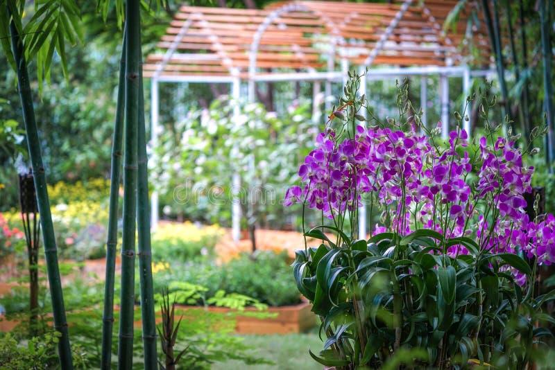 Perto destaque acima a orquídea roxa bonita no jardim fotos de stock