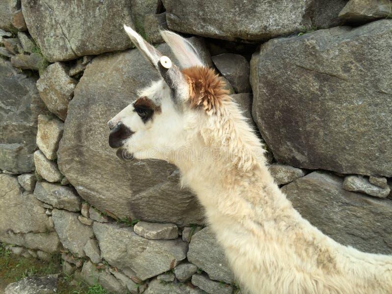 Peru - Machu Picchu imagens de stock royalty free