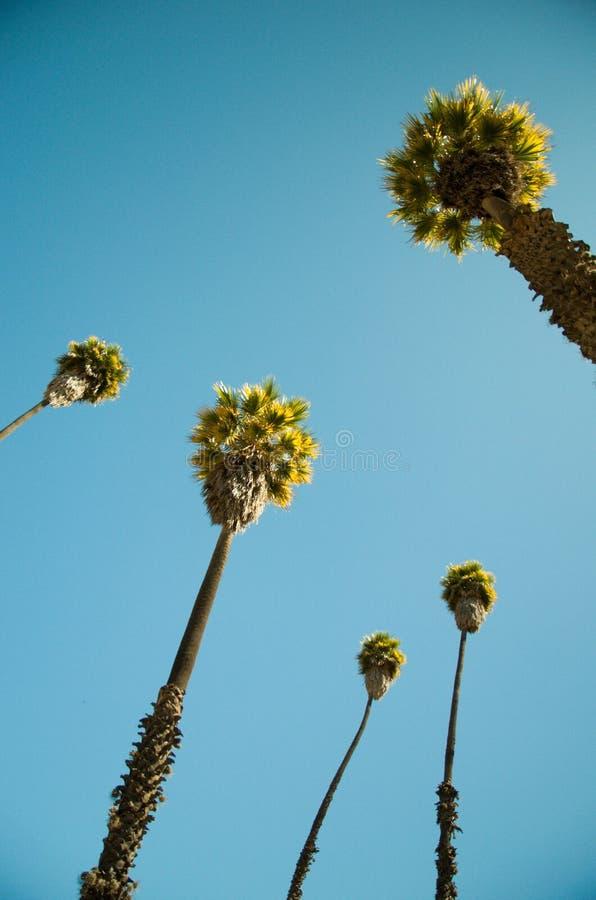Peru Palms stock photography