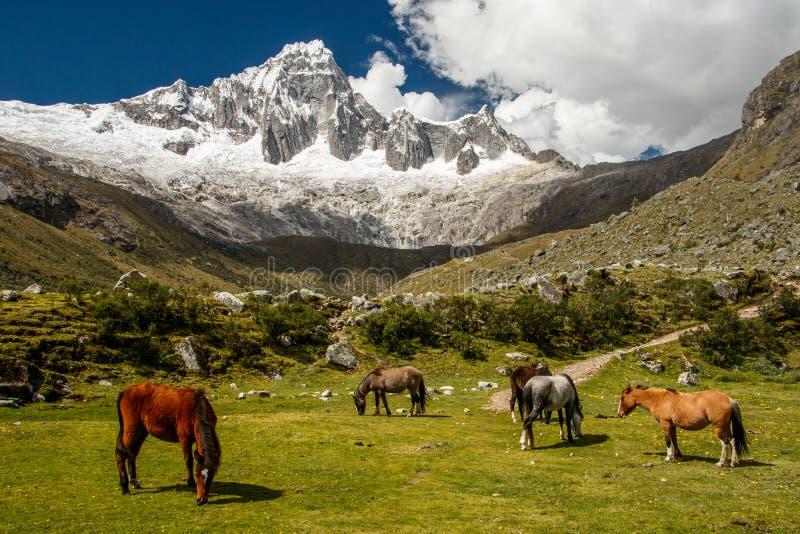 Peru - passeio na montanha de Santa Cruz foto de stock royalty free