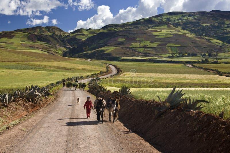 Peru - Platteland hoog in de Andes dichtbij Urubamba stock foto's