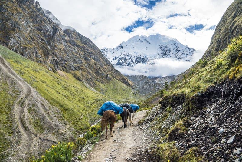 Peru Trekking de Salkantay fotografia de stock