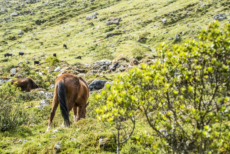 Peru Trekking de Salkantay fotos de stock royalty free