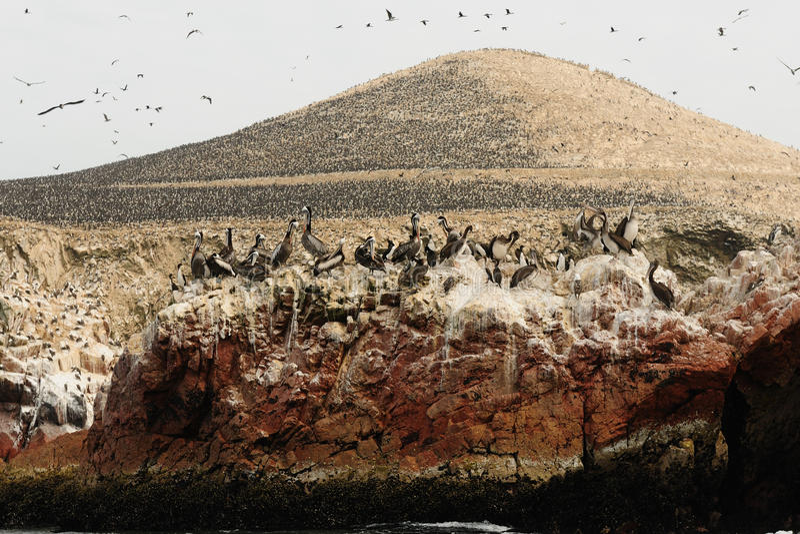 Download Peru, Wildlife On Islas Ballestas Near Paracas Stock Image - Image: 23545333