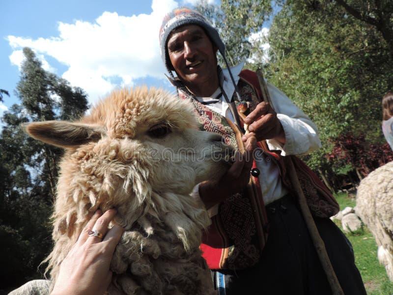Peruan shephered med hans lama arkivfoto