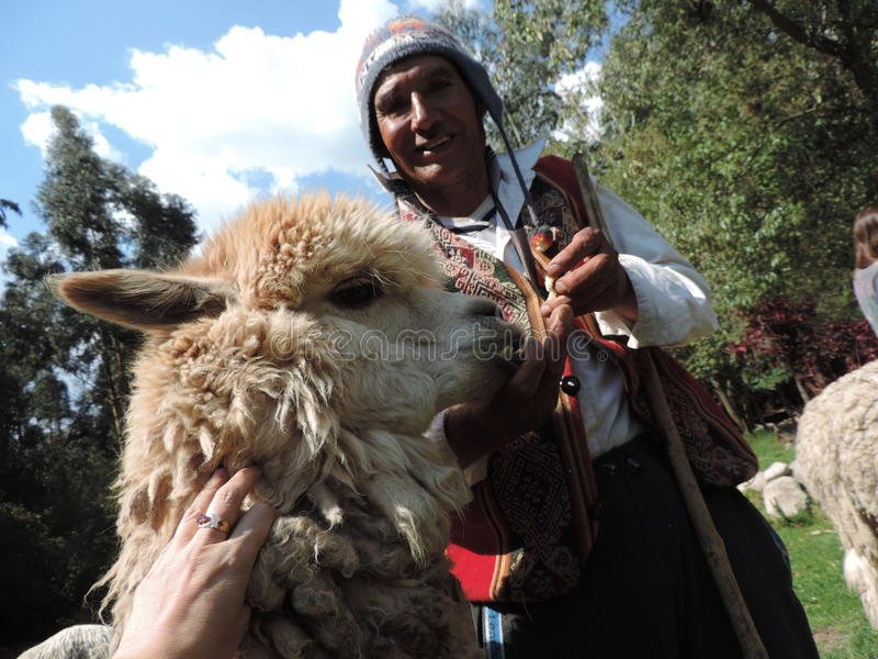 Peruaner shephered mit seinem Lama stockfoto