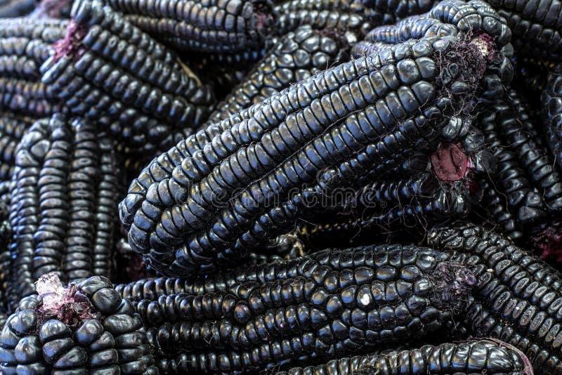 Peruanischer purpurroter Mais, der hauptsächlich benutzt wird, um Saft (chicha) oder einen Gelee ähnlichen Nachtisch zuzubereiten lizenzfreies stockfoto