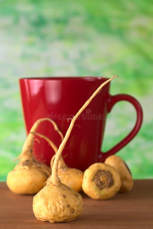 Peruanisches Ginseng lizenzfreie stockfotos