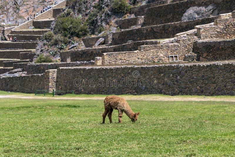 Peruviaans berglandschap met Ruïnes van Ollantaytambo in Heilige Vallei van Incas in Cusco, Peru stock foto