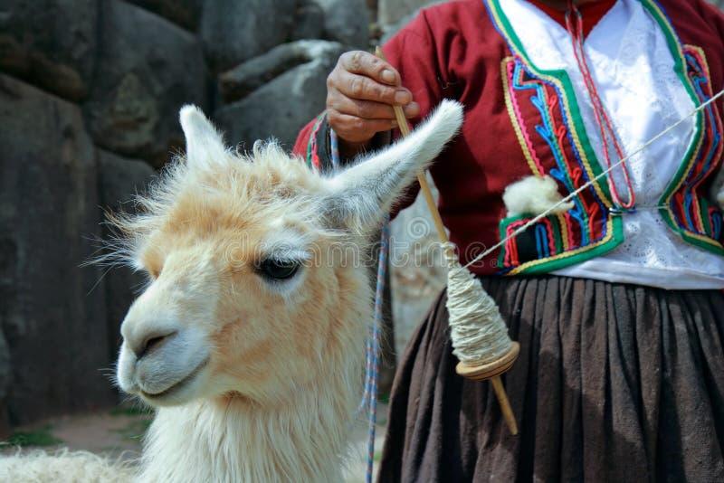 Peruvian Lama. Lama with Peruvian woman spinning yarn in the background and incan ruins. (Peru stock photography