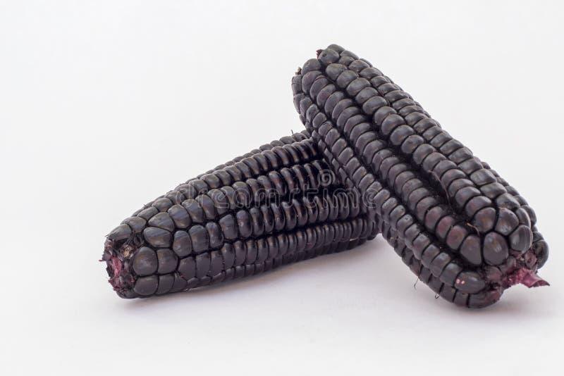 Peruvian purple corn (maiz morado), which is mainly used to prepare juice called chicha morada. stock photo