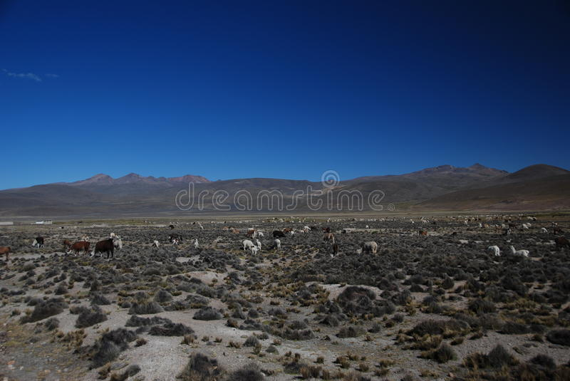 Peruvian wild landscape royalty free stock photo