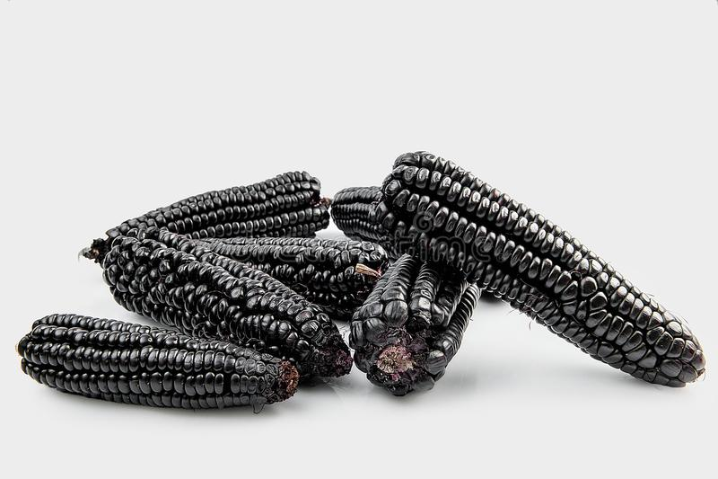 Peruwiański purpurowy kukurydzany maiz morado który głownie używa przygotowywać sok, dzwonił chicha morada zdjęcie stock