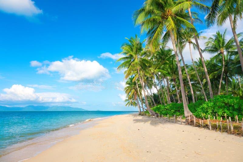 Perzik- en kokospalmen royalty-vrije stock afbeelding
