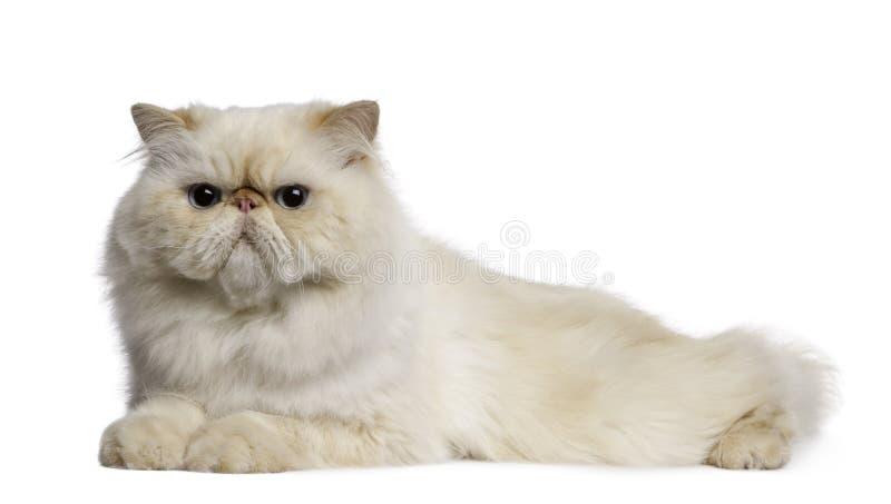 Perzische kat, 2 jaar oud, het liggen stock fotografie