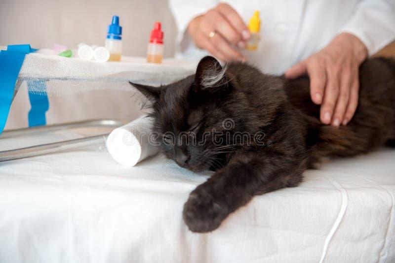 Perzische kat met veterinaire arts bij dierenartskliniek royalty-vrije stock foto's