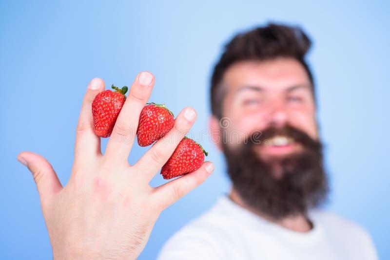 A pesar de gusto dulce las bayas contienen el azúcar cero Fresa llena con los antioxidantes de la fibra de la vitamina C Inconfor imagen de archivo libre de regalías