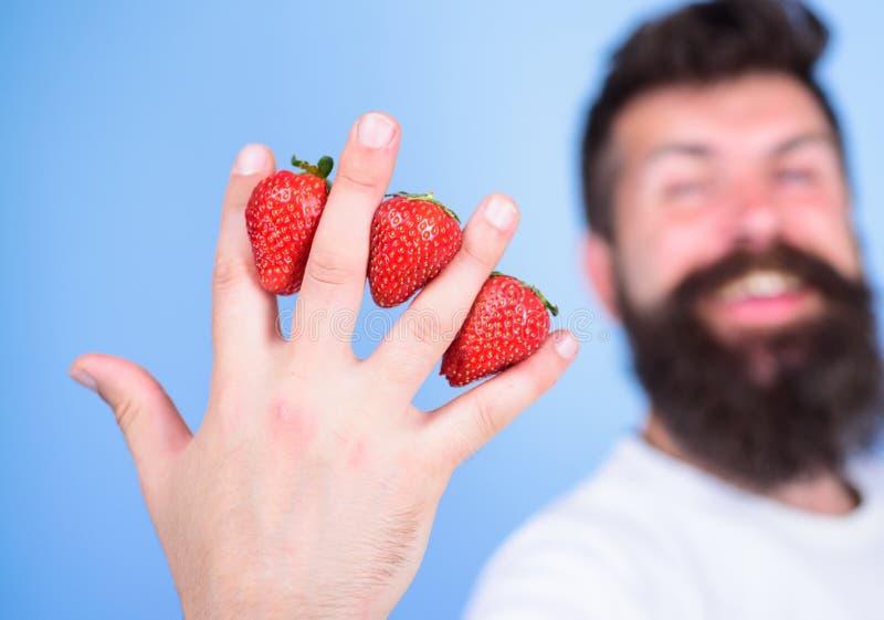 A pesar de gusto dulce las bayas contienen el azúcar cero Sirva las fresas del inconformista de la barba entre el fondo del azul  fotografía de archivo