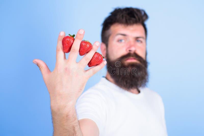 A pesar de gusto dulce las bayas contienen el azúcar cero Sirva las fresas del inconformista de la barba entre el fondo del azul  imagenes de archivo