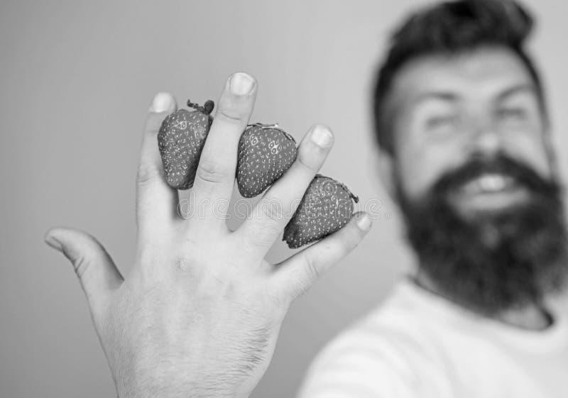 A pesar de gusto dulce las bayas contienen el azúcar cero Sirva las fresas del inconformista de la barba entre el fondo del azul  imágenes de archivo libres de regalías