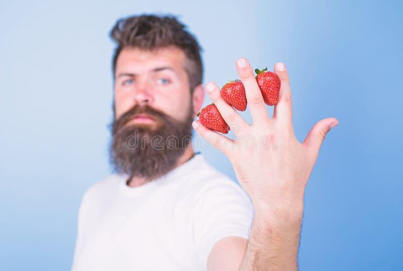 A pesar de gusto dulce las bayas contienen el az?car cero Sirva las fresas del inconformista de la barba entre el fondo del azul  fotografía de archivo libre de regalías